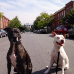 Aristo and Khaleesi from South Baltimore