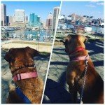 Zoey and Jaxxx from Federal Hill