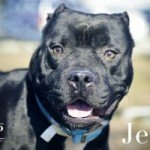 Jett, Butch and Roses Available at BARCS!