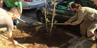 19 New Trees Planted Around South Baltimore